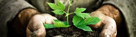 Residuos | Renovables | Crisol Energía Renovable